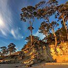 HDR Hanssons Beach trees - Bruny Island, Tasmania by PC1134