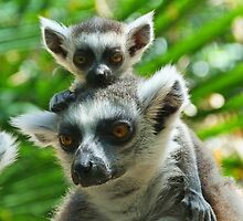 Baby Lemur Views The World by Margaret Saheed