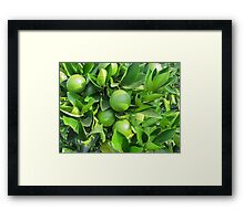 lemon on the tree Framed Print