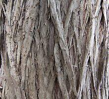 Cedar Bark by Martha Medford