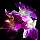 Dendrobium Orchids by Loree McComb