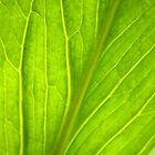 Green Leaf Abstract by Christina Rollo