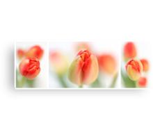 Fresh Tulips (Triptych....) Canvas Print