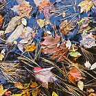 Autumn Potpourri by John Butler