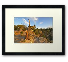 """Old Man Tree"" Framed Print"