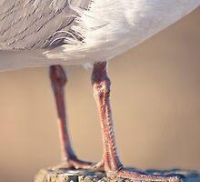 Seagull by lightwanderer