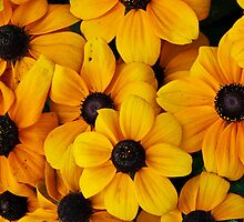 Blackeyed Susan Flowers by AnnDixon