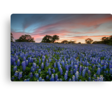 Texas Bluebonnet Images - Evening in the Texas Hill Country 2 Canvas Print