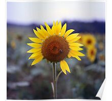 Sunflower's Last Days Poster