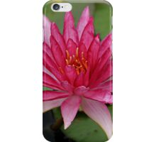 A single flower can be my garden, a single friend, my world.  iPhone Case/Skin