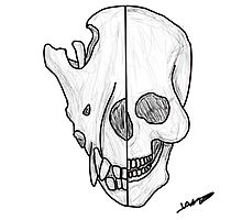 Human Wolf Skull by Mike2951