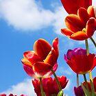 Vibrant Spring by Lindie Allen