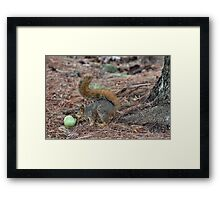 The Tomato Thief Framed Print