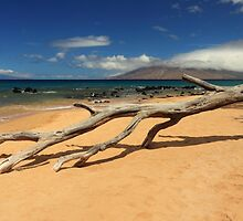 A Branch On Keawakapu Beach by James Eddy