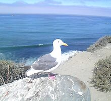 The Seagull on the Rocks by KimRapoport