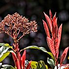 Red Foliage and Seeds by Wolf Sverak