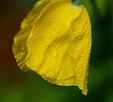After the Sun Comes Rain, Again by OzzieBennett