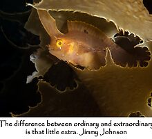 Nature is extraordinary by Alison Perkins