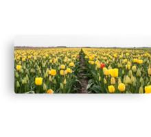 Dutch Tulips part 6 Canvas Print