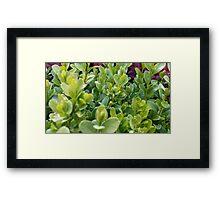 flowers vegetable spring garden Framed Print