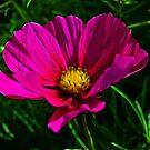 Fractal Flower 1 by lisa1970