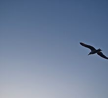 seagull by kippis