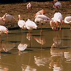 They feel at home! - Flamingos in the new Paris Zoo by bubblehex08