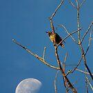 Bird & Moon by Daniel Owens