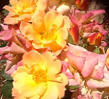 Jacob's Coat Roses #2 by alcological
