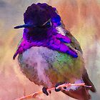 Costa's Hummingbird by Bunny Clarke