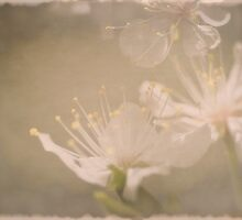 Fading Blossoms by Dorothy  Pinder