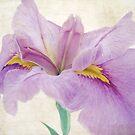 Petals of Love by Susan Werby