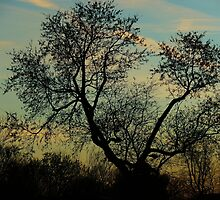 Wind whisperer by Jeannine St-Amour