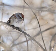 Hiding ~ Tree Sparrow by Jeannine St-Amour