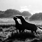 14.9.2014: Playing Horses by Petri Volanen
