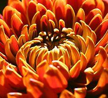 Autumn Bloom by Terri~Lynn Bealle