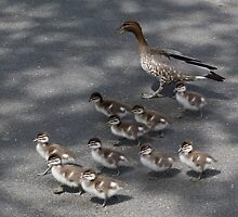 Marching Ducklings by Margaret Saheed