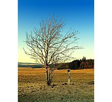 Old tree and old small monument   landscape photography Photographic Print