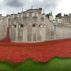 Tower Poppies 13/09/14 by BlueShift