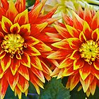 Dahlia Duplication by John Butler