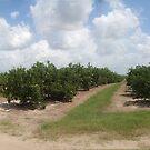 The Citrus Grove by John  Kapusta