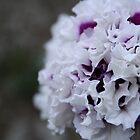 Flowers by Corbetio