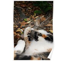 Playing in the leaf litter Poster