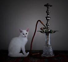 Cat with  Waterpipe (Belonging to Alice) - https://www.facebook.com/thestudiocats by Kim-maree Clark
