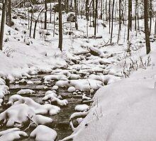 Forest Stream In Winter by BonnieToll