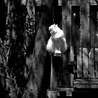 White Cat On Bench Black & White by BonnieToll