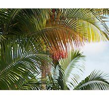 Palms: Hilo, Hawai'i Photographic Print