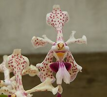 and now for something completely different, orchids  by Wieslaw Jan Syposz