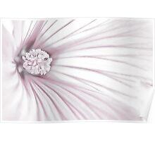 Lavatera Flower Stamen Macro  Poster