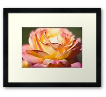 Rest in piece my friend - All Proceeds to Canadian Breast Cancer Foundation - Peace Roses Framed Print